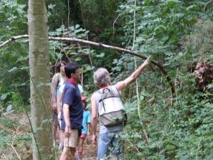 Sentier du Renard-Eric explique la forêt jardinée
